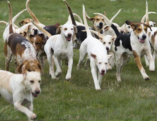 dogtraining Secrets to Dog Training