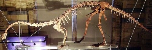Massospondylus skeleton - incorrectly posed as a bipedal dinosaur