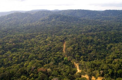 Congo Basin Forest e1300211837273 10 Most Endangered Forests on Earth