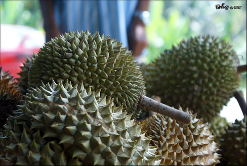 durian 10 of the Most Exotic Tropical Fruits on Earth