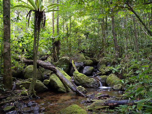 madagascar 10 Most Endangered Forests on Earth