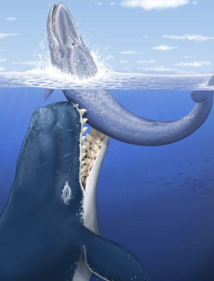 An Artist's impression of the giant Leviathan melvillei