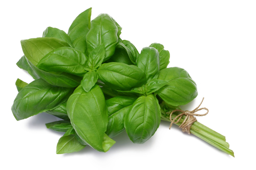 A bunch of basil