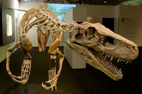 A full skeleton of the Herrerasaurus