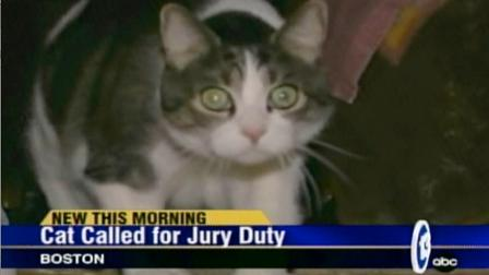 A cat has been called in for jury duty