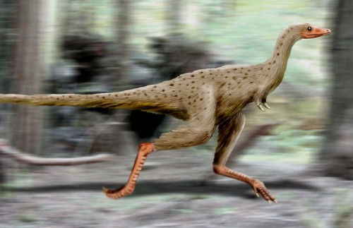 What the Linhenykus monodactylus may have looked like